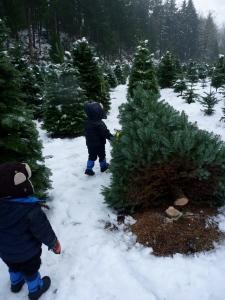 ucut christmas trees near seattle