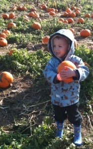 pumpkin patch near vancouver with kids