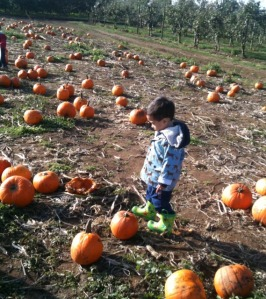 picking out pumpkins near vancouver with kids