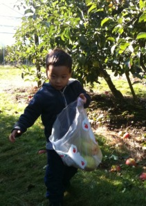 Apple Picking at Taves Farm in Abbottsford with kids