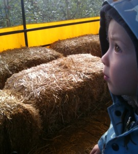 Taves farm with kids in the fall near Vancouver
