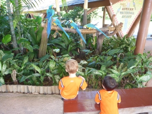 Jurong Bird Park with kids in Singapore