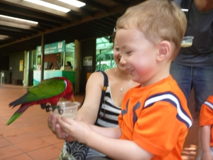 Private tour with kids at Jurong Bird Park in Singapore