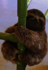 visiting sloths in costa rica with kids