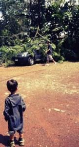 Tree falls on car in costa rica