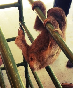 where to see sloths in costa rica with kids