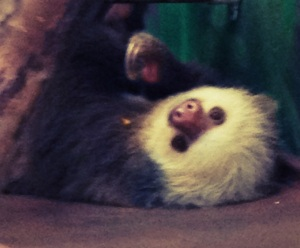 sloth sanctuary in costa rica with kids