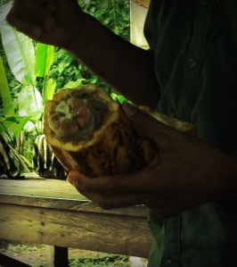 Learning about cocoa with kids in Costa Rica