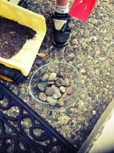 Making a terrarium with kids and diggers