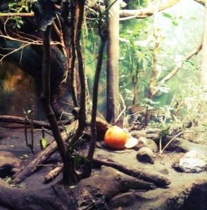 Pumpkin Bash at Woodland Park Zoo