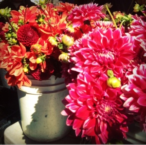 dahlias are gorgeous at the ballard farmers market in the fall