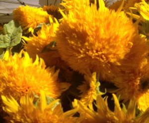 gorgeous yellow flowers at the ballard farmers market in the fall