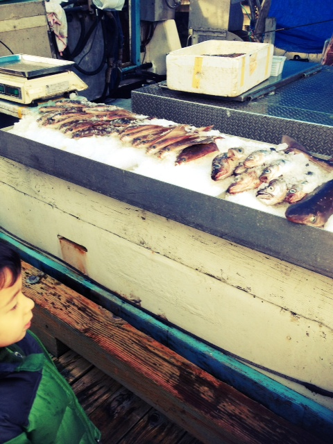 Steveston Fish Market near Vancouver BC with kids