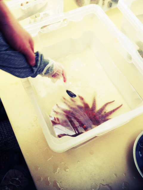 Seattle aquarium preschool program