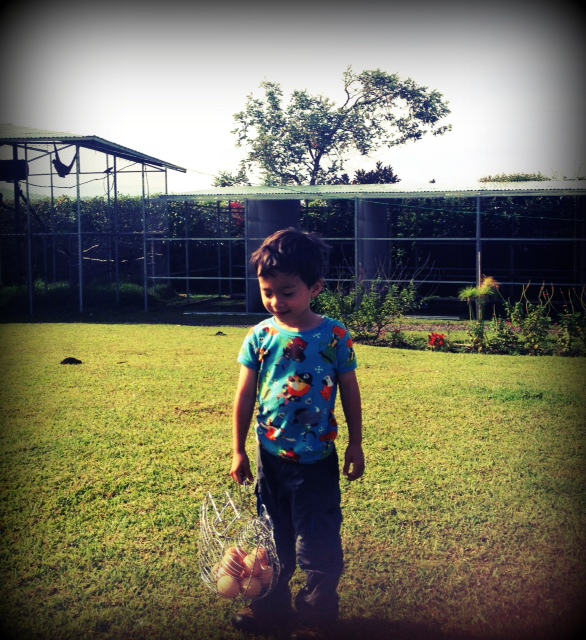 kids collecting eggs at the toucan rescue ranch in San Isidro Costa Rica