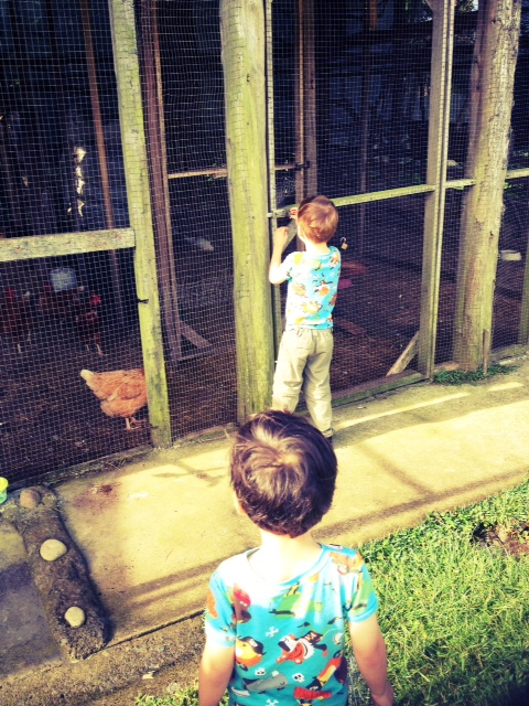 gathering eggs for breakfast at the Toucan Rescue Ranch