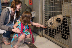 Feed a panda at Zoo Atlanta
